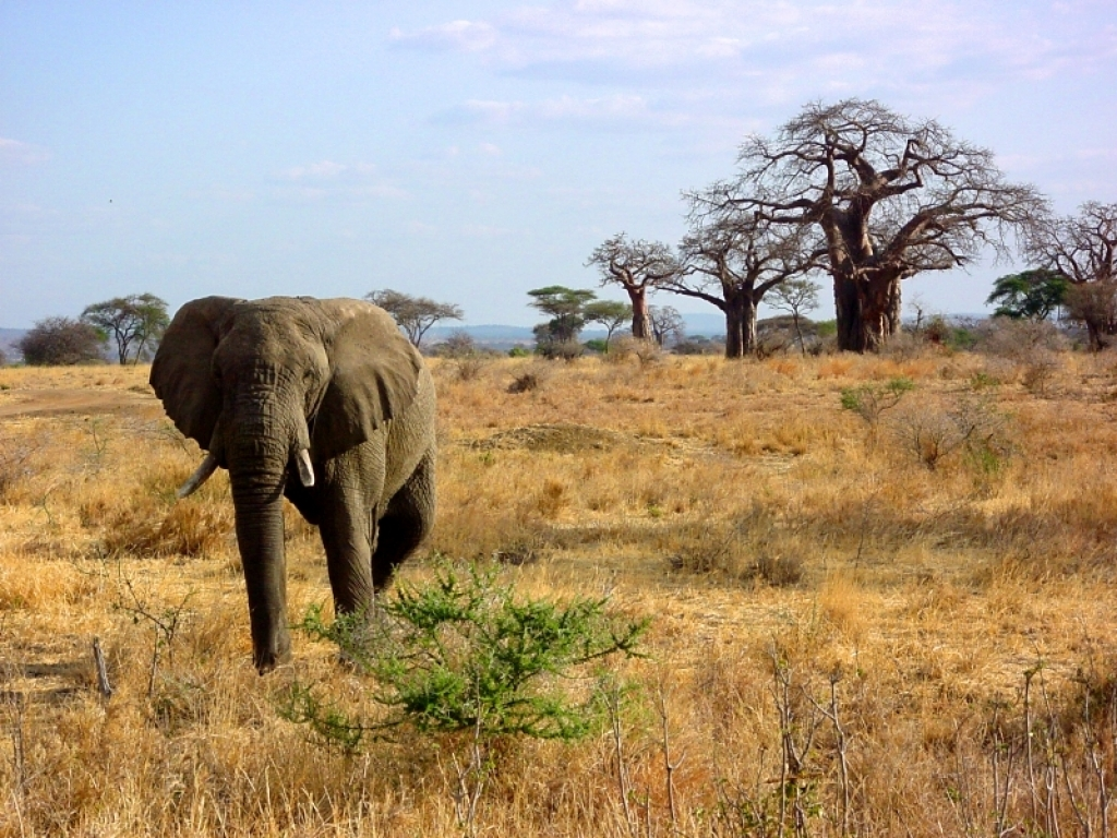 afrika tansania insel sansibar