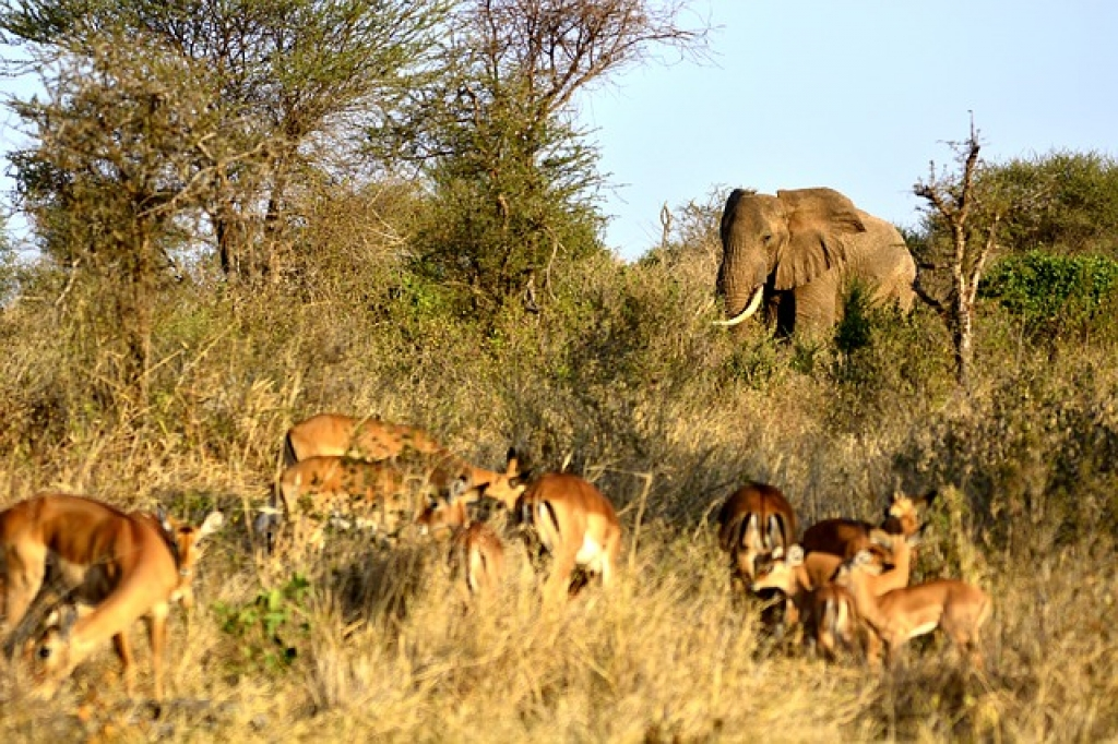 Amboseli Kenia