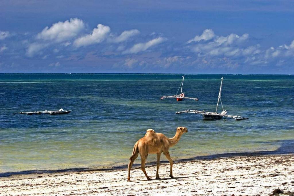 Kenia Hotel Am Strand  Sterne